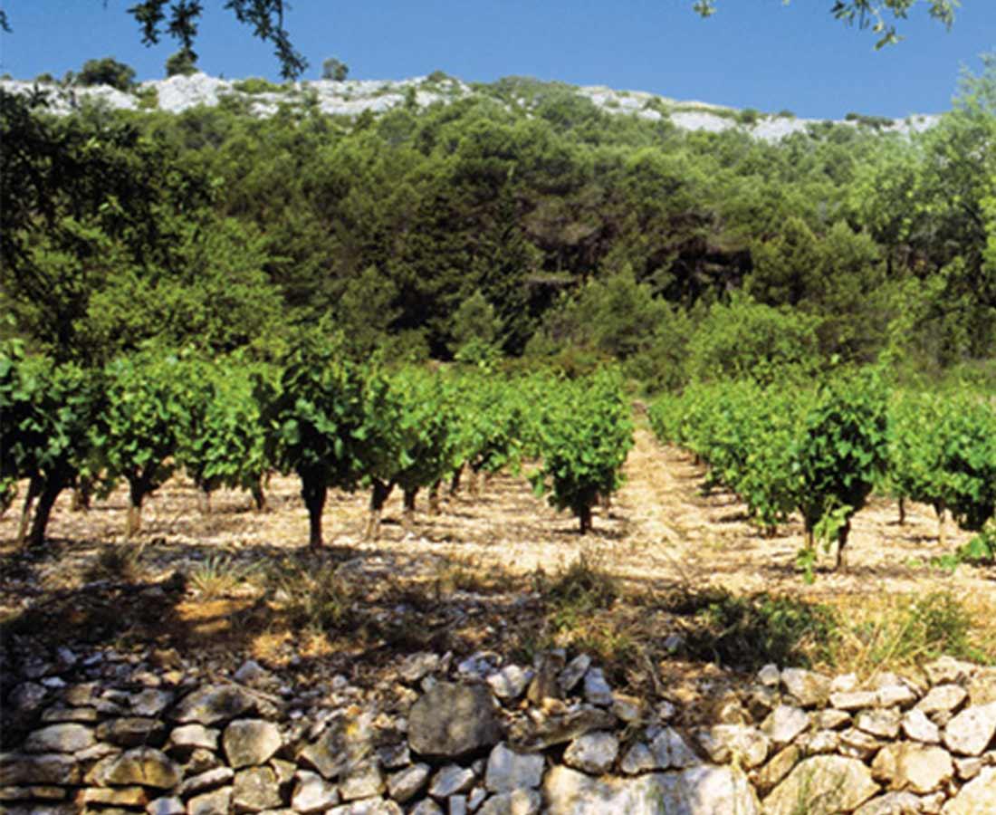 Domaine-De-La-Grange_Des-Peres