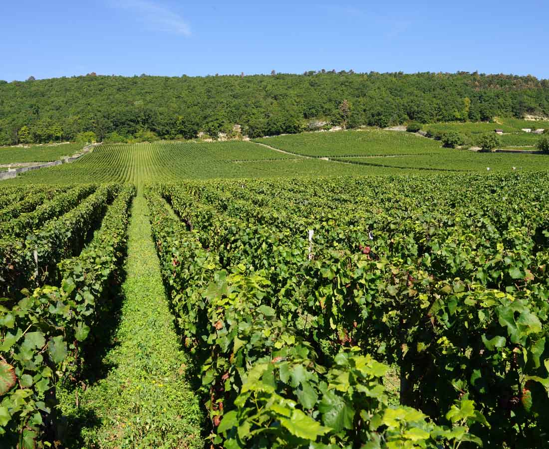 Great-Domaines-Fourrier-2