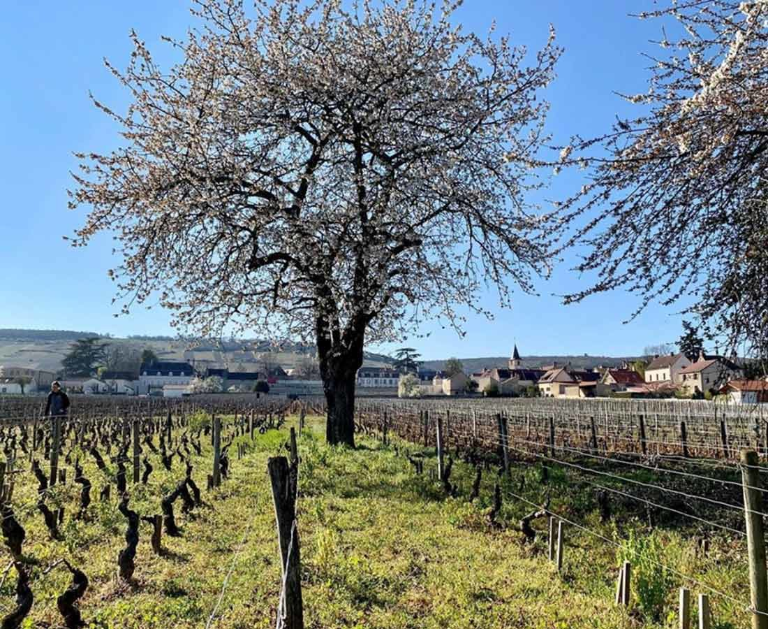 Great-Domaines-Grivot-2