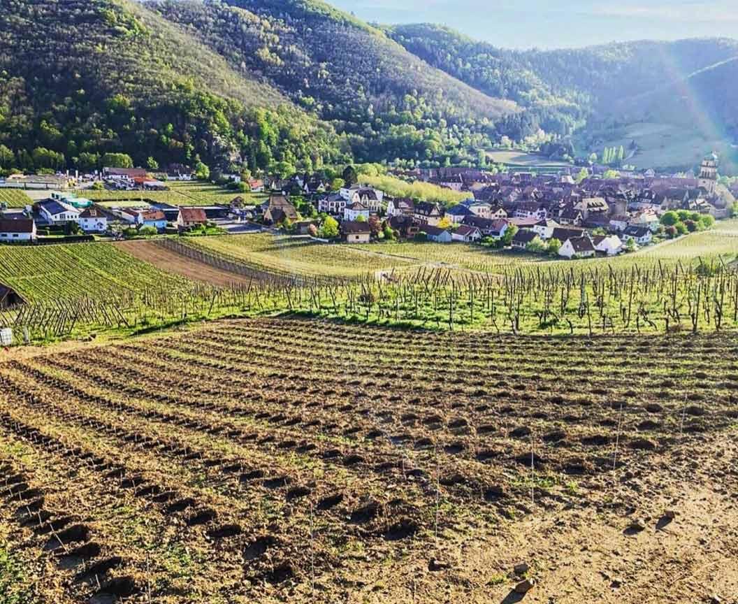 Trapet-Alsace-2
